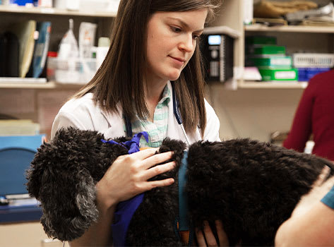 Geriatric Care for Cats & Dogs | Sharon Lakes Animal Hospital